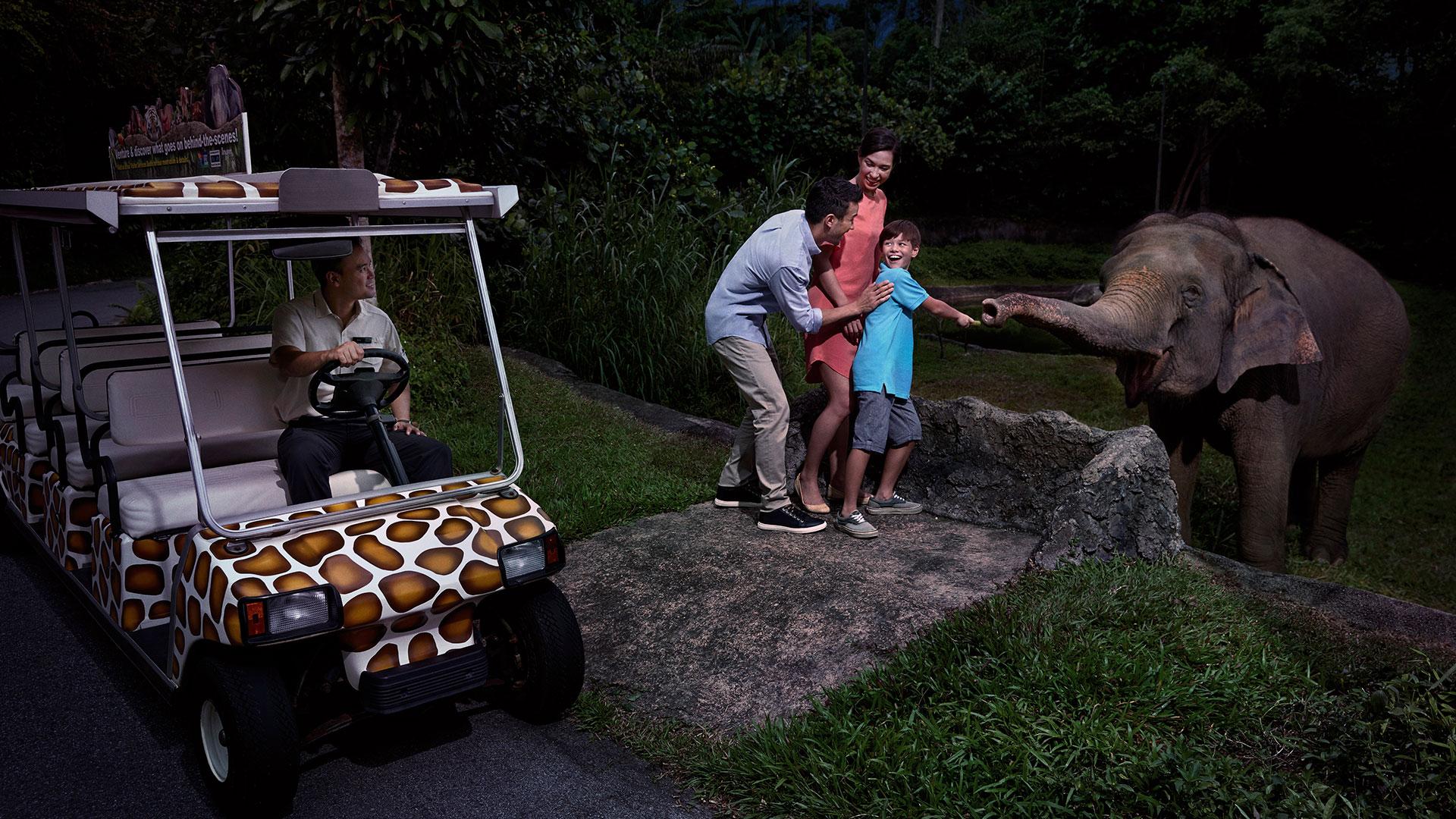 Night Safari Nocturnal