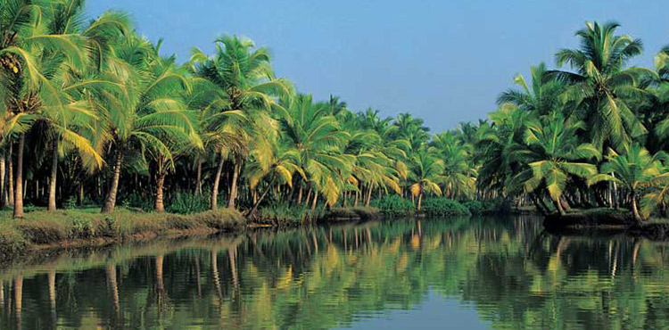 Kerala Family Holiday Package (4N/5D)
