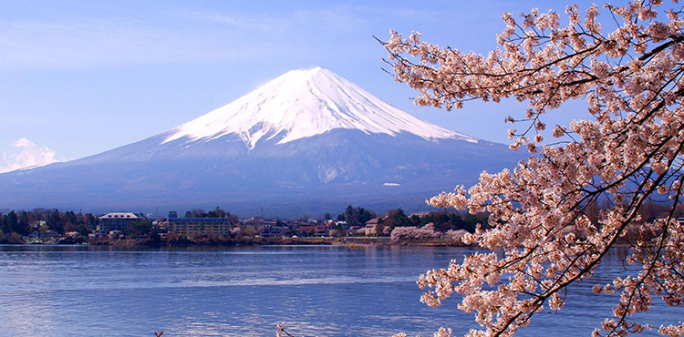 Japan Cherry Blossom Package (7N/8D)